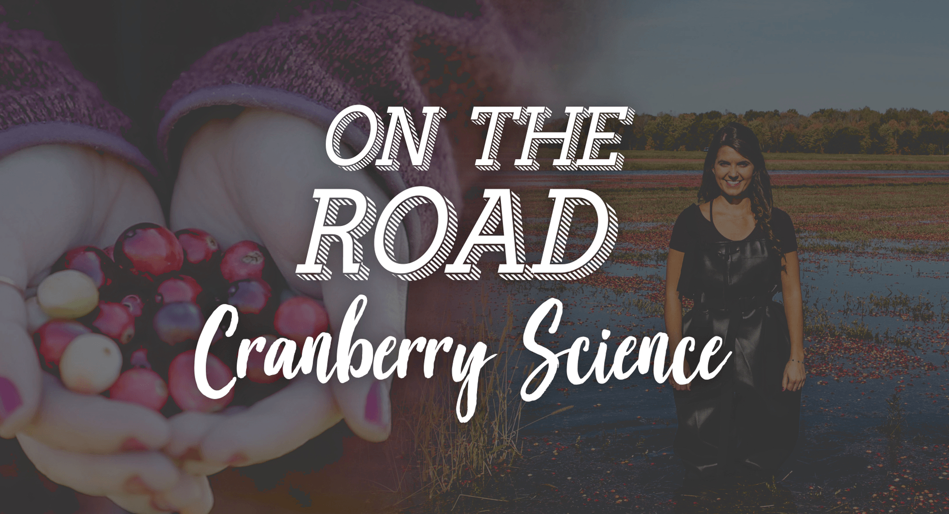 On the Road with Lauren: Cranberry Science and a Splash of Red